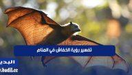 تفسير حلم رؤية الخفاش في المنام لابن سيرين