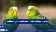 تفسير رؤية عش العصافير في المنام لابن سيرين