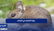 تفسير رؤية الفئران في المنام لابن شاهين