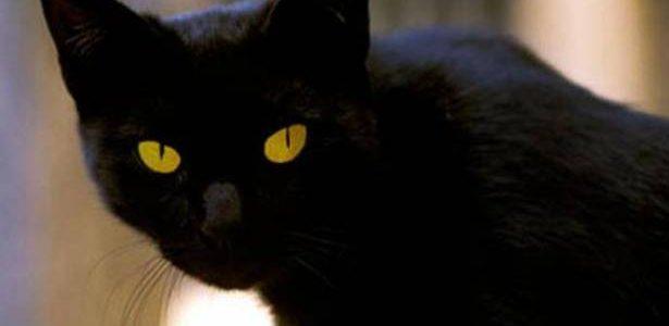 تفسير حلم القطة السوداء في المنزل في المنام