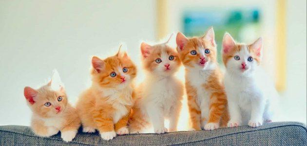 تفسير رؤية القطط في المنام لكبار المفسرين