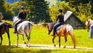 تفسير ركوب الحصان في المنام لابن سيرين