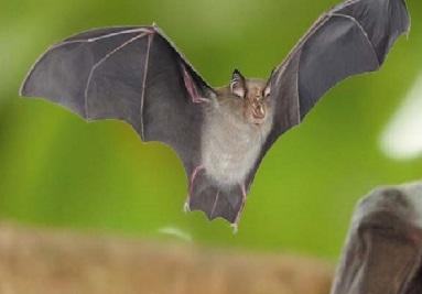 تفسير رؤية الخفاش في المنام لابن سيرين