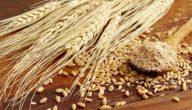 تفسير رؤية القمح في المنام