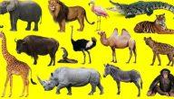 اي المخلوقات التالية من المخلوقات الكانسة
