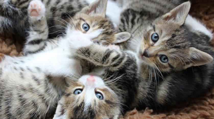 تفسير حلم ضرب القطط في المنام لابن سيرين للمتزوجة والعزباء موقع تثقف