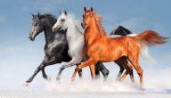تفسير رؤية الخيول في المنام لابن شاهين